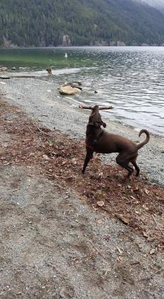 Chilliwack Lake Dog Walking