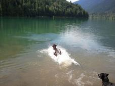 Swimming! Moto doesn't swim!