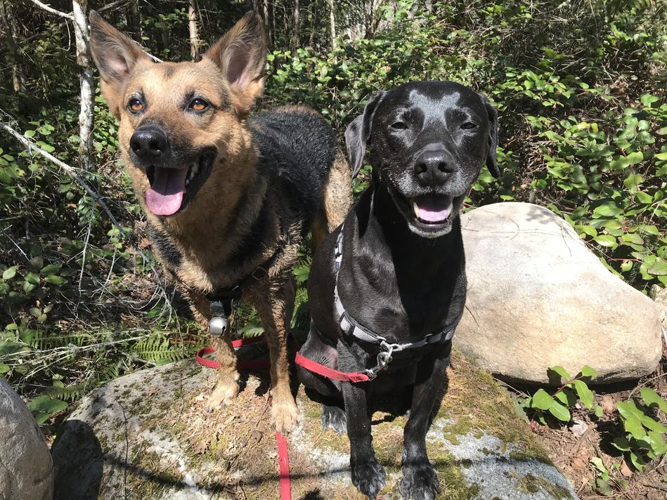 Happy Hikers Dog walks