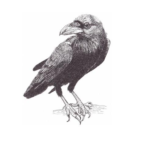 A corvid