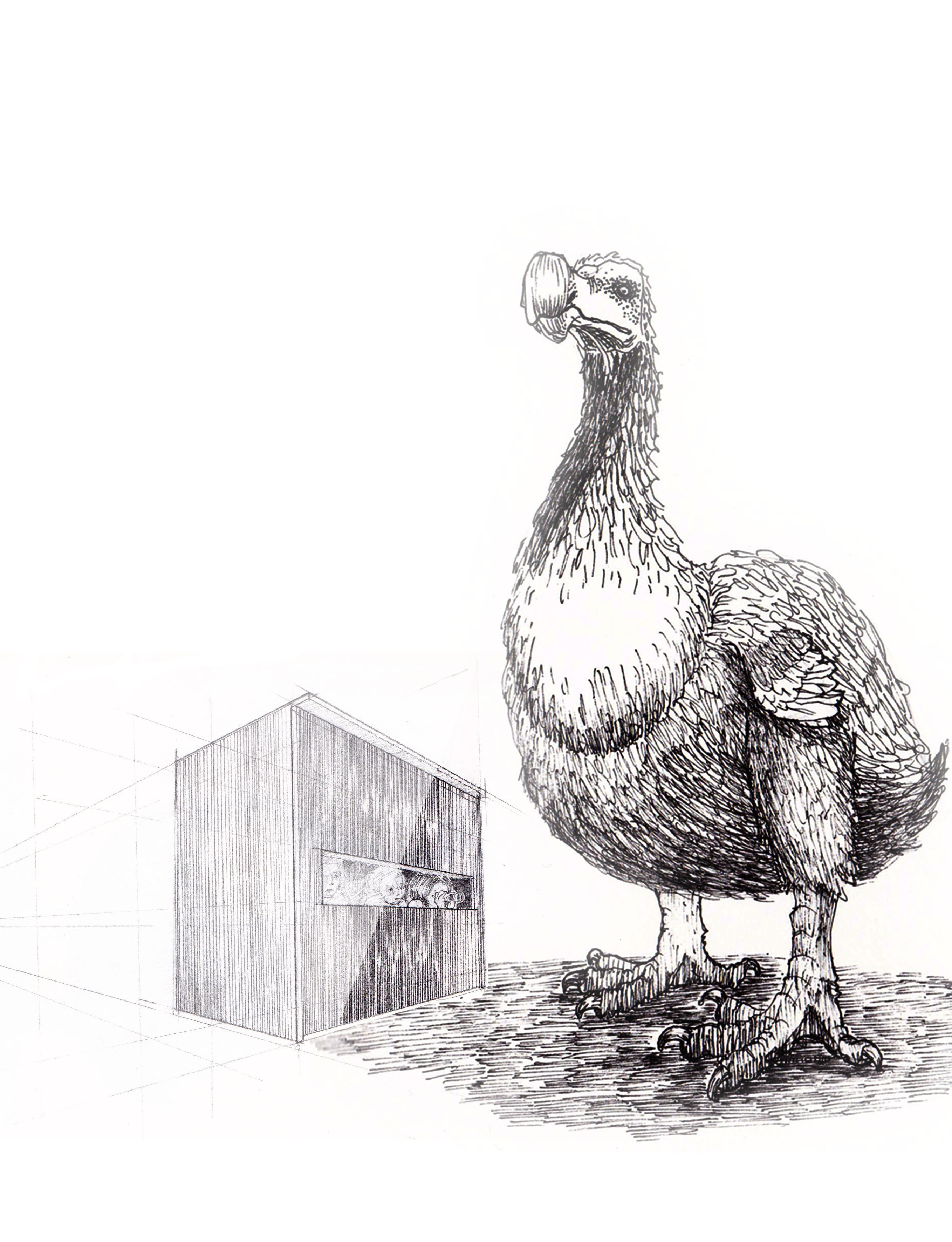 Dodo and the shed