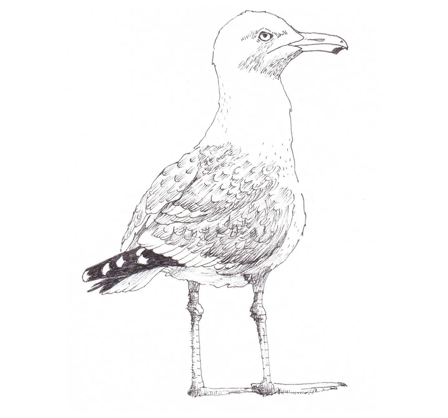 3-seagull copy