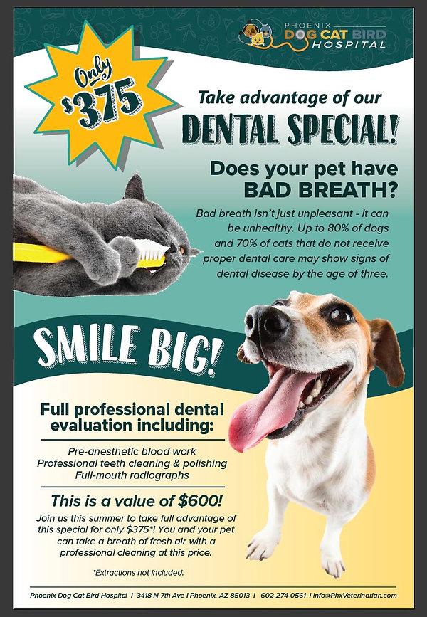 Dental Special Offer