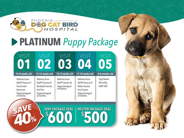 Puppy Package Special Offer