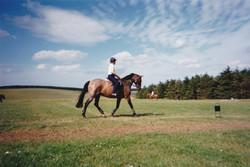 Understanding Horse/Human Ridden Connection