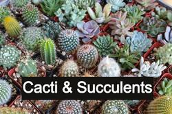 cacti_edited