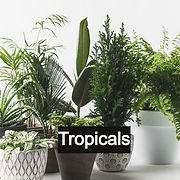 houseplants_edited.jpg