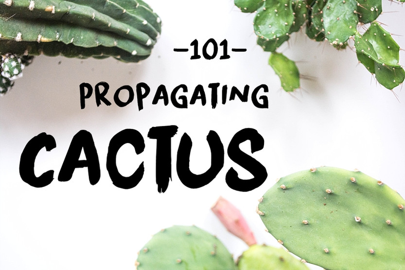 HOW TO: Propagating Cactus 101