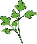 GLL_illustrations-coriander.png