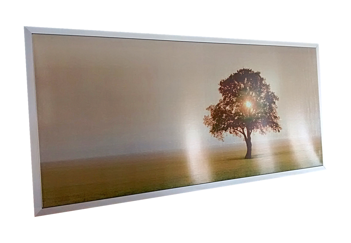 PX710_Tree