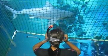 Sarah Jones swimming with sharks