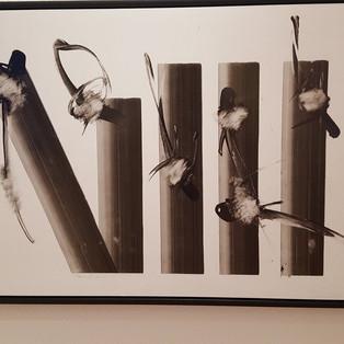 Ian LEE Untitled-5 barres 6 piafs-2016 Acrylique sur toile 55x80cm-3500€