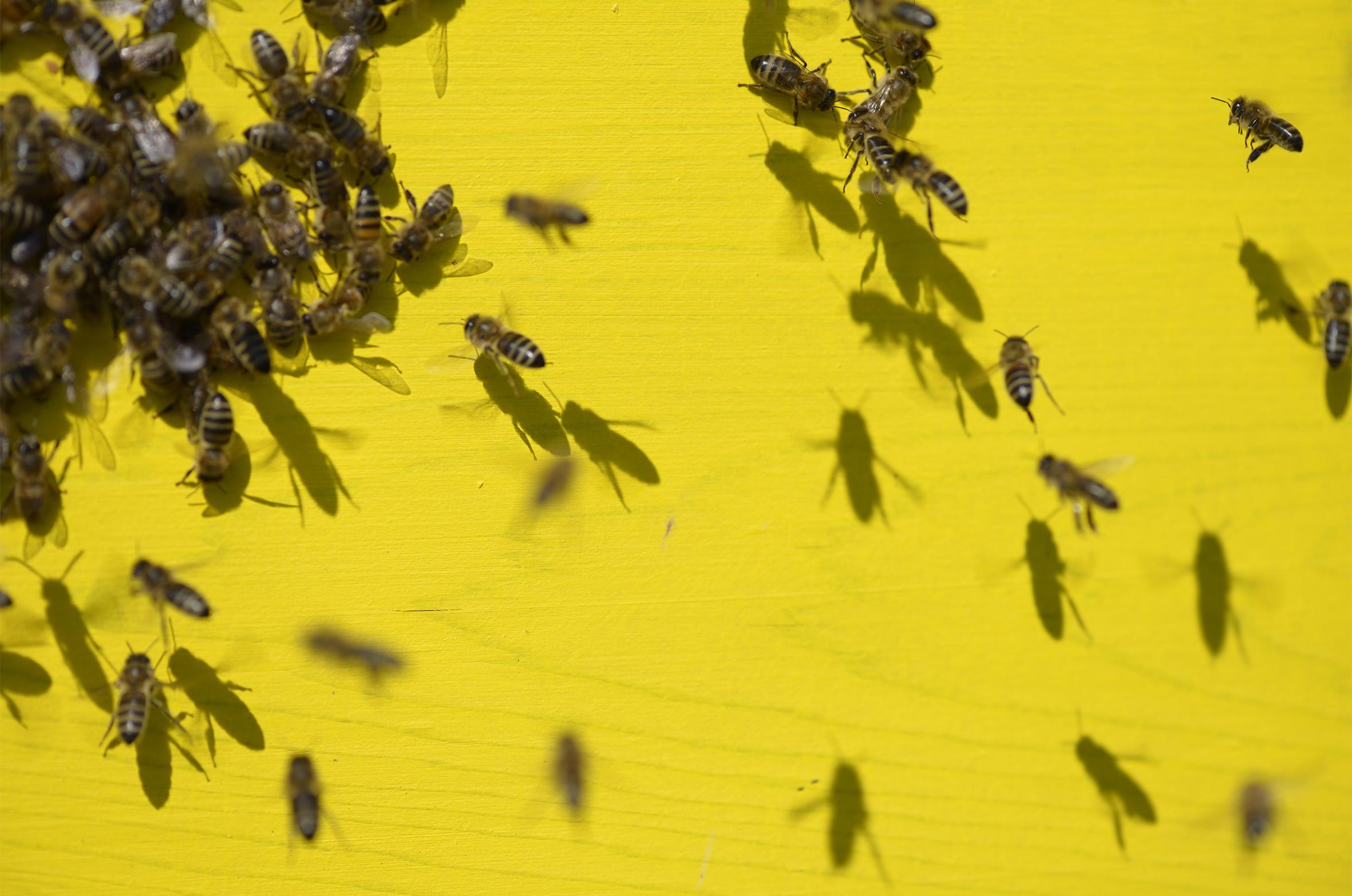 Le vol des abeilles