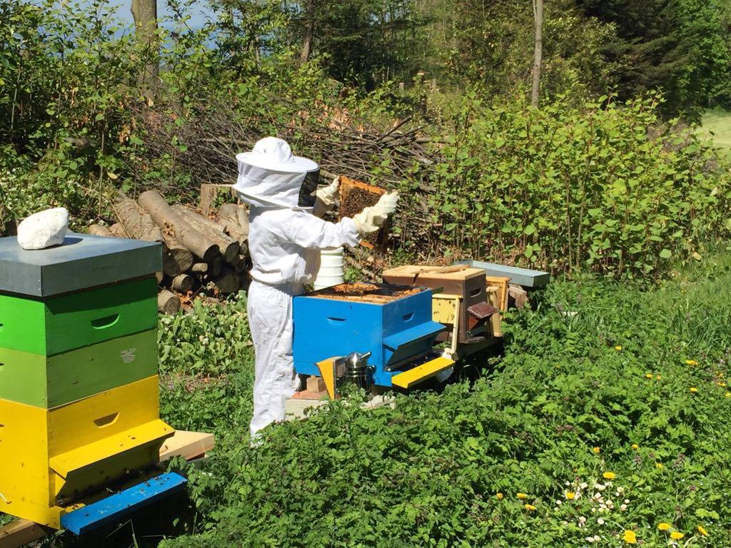 Visite de mes ruches