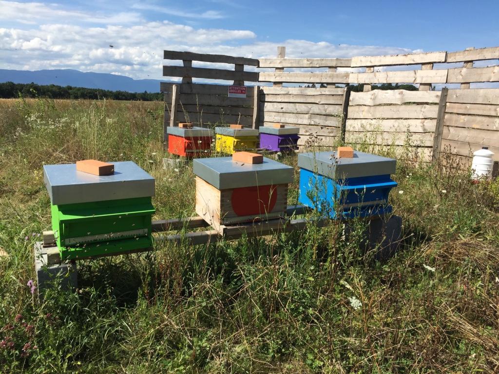 Le rucher en pleine jachère