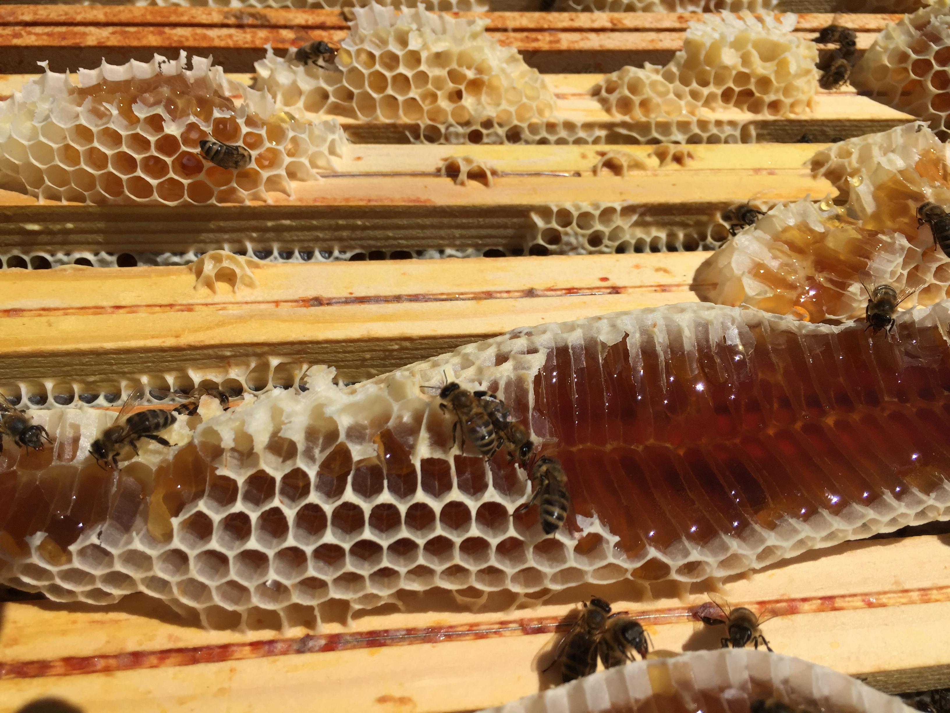 Le miel déborde des cadres