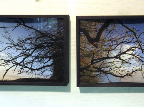 Trees and Sky Diptych