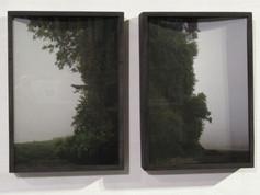 Field Tree Didtych 2