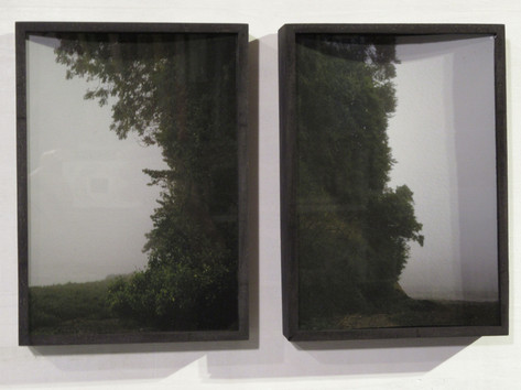 Field Tree Diptych 2