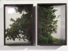 Field Tree Diptych 1