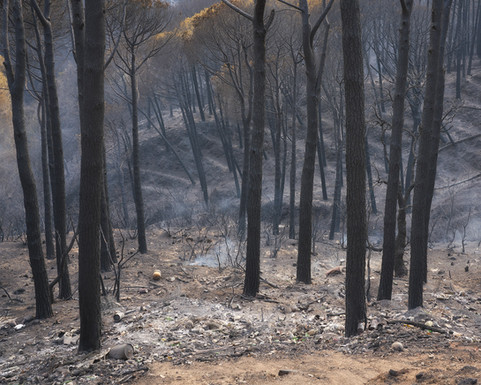 Abusive charge in the subwoods of the burned pine pine