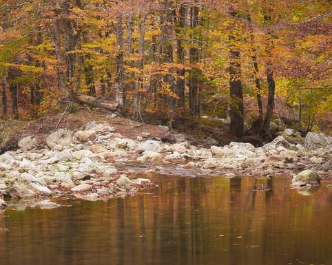 Autumn 89