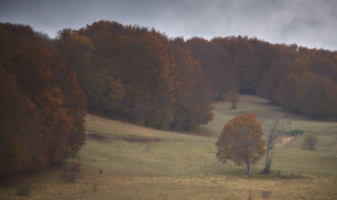 Autumn 42