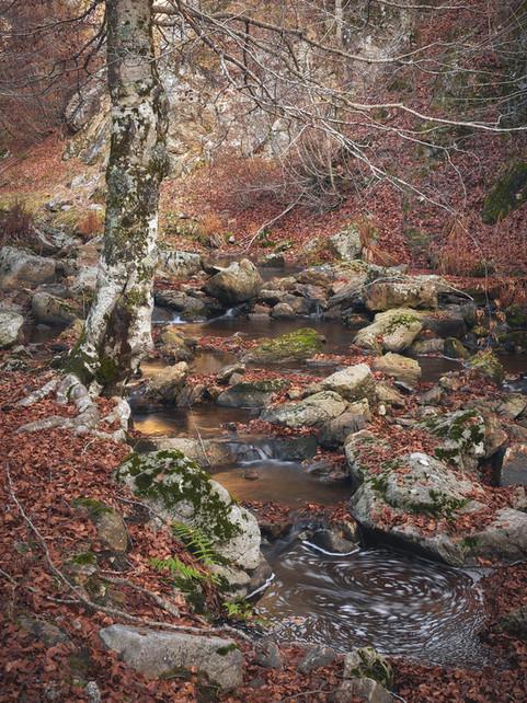 Autumn126