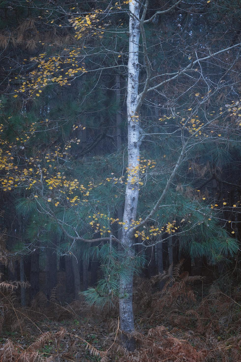 Autumn153