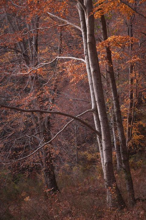 Autumn132