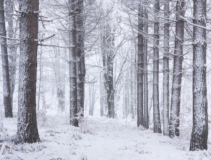 Winter53