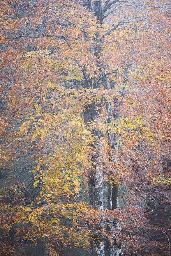 Autumn93