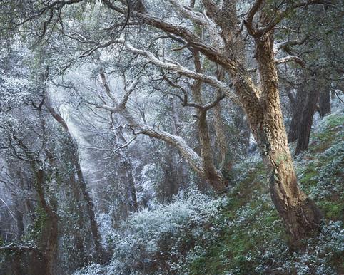 Hybris at winter