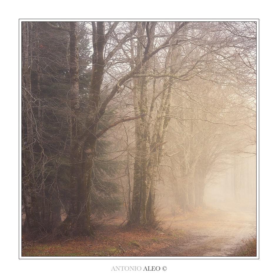 Camminata nel silenzio - Parco Nazionale della Sila