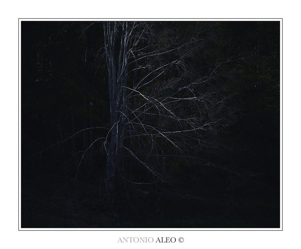 Anima persa - Faggio in ombra