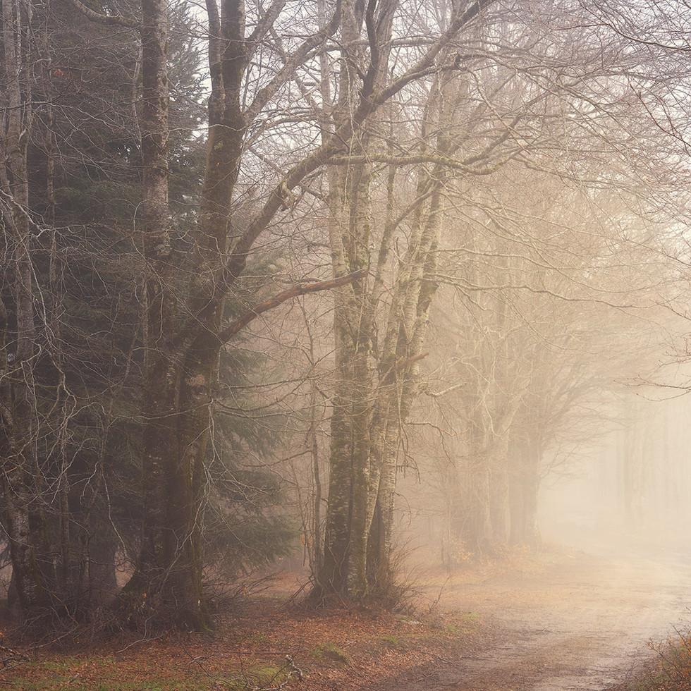 Silence walking