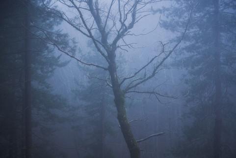 Dark soul of nature