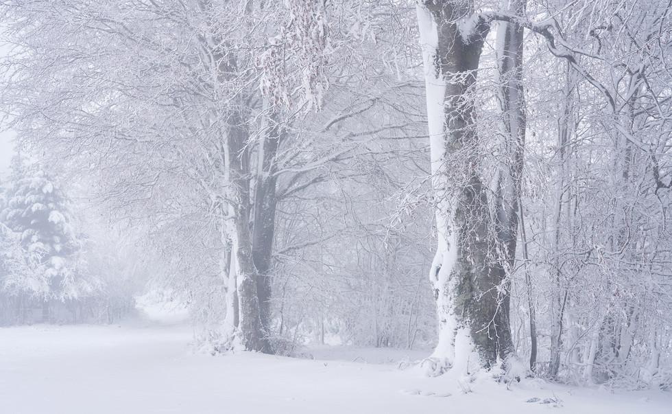 Winter49