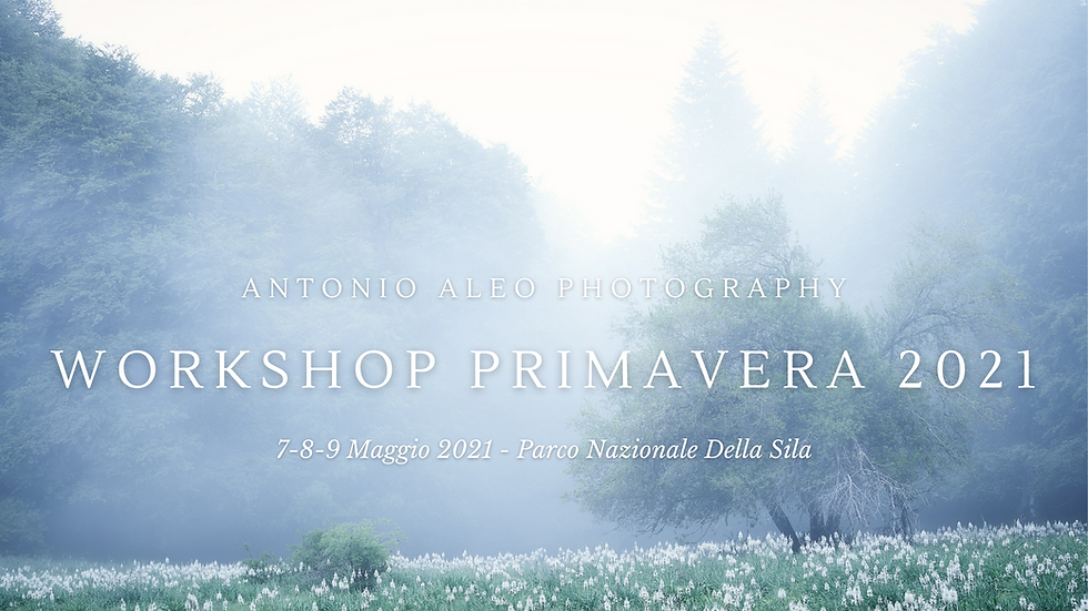 Workshop Primavera 2021