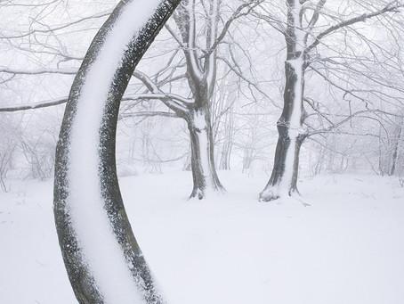 """Photographic stories: """"Iñaki Bolumburu - The Dancing Tree"""""""