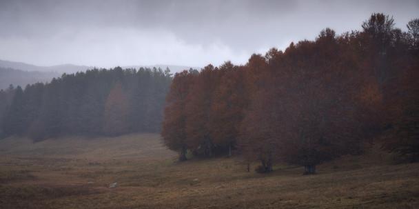 Autumn 41