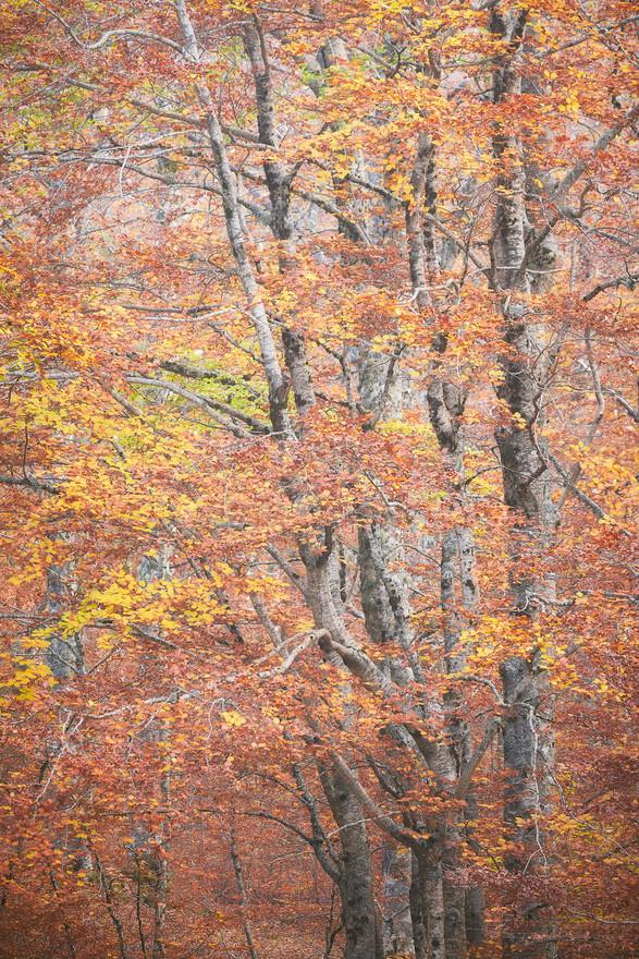 Autumn81