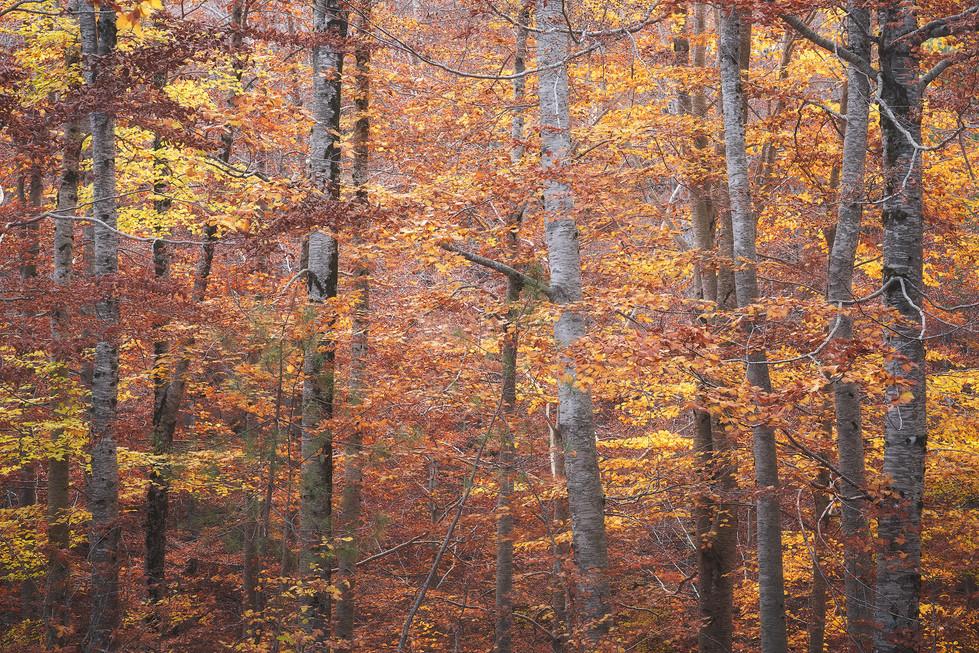 Autumn84.jpg