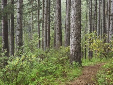 ''L'aria dei boschi e gli effetti positivi sul nostro sistema immunitario e nella nostra psiche''