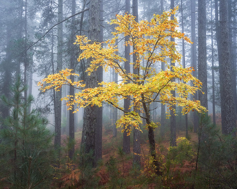 Luminous tree