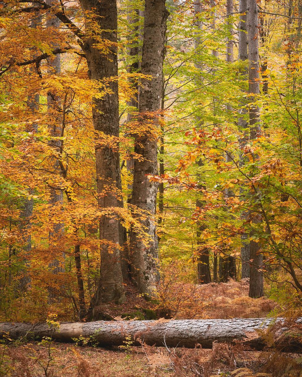 Autumn 101