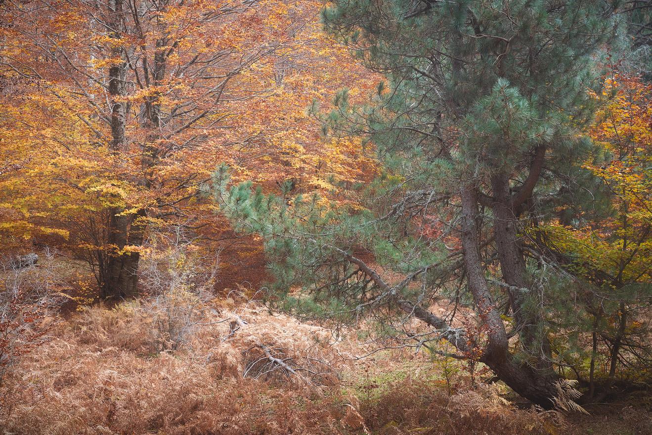 Autumn76