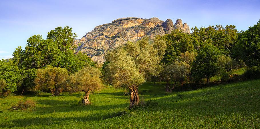 Garden-of-Calabria.jpg