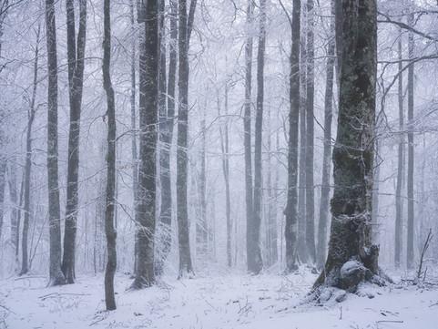 Winter34