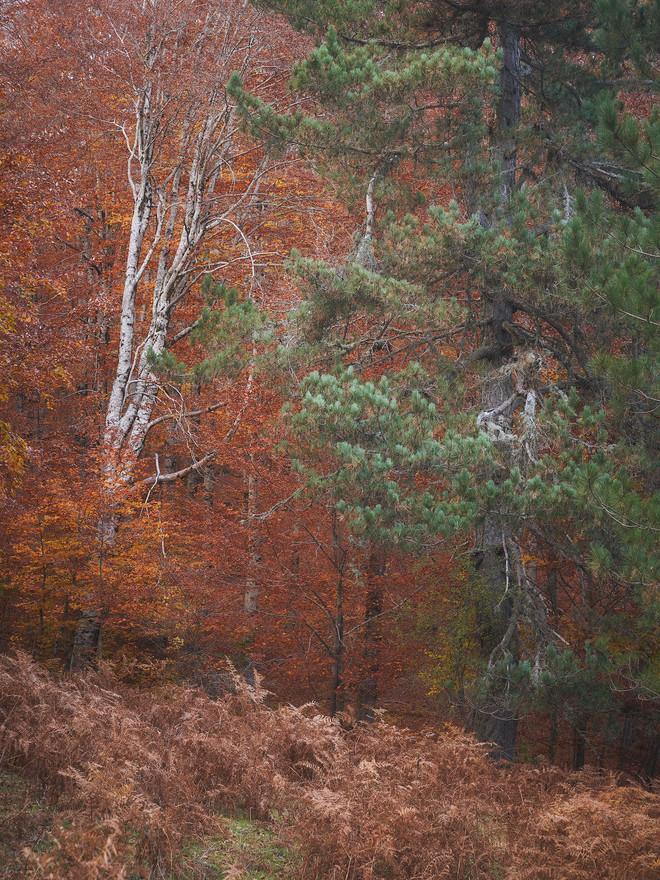 Autumn78